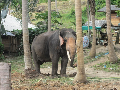 Elefant im Camp