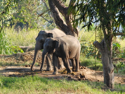Elefantendamen unterwegs Foto: © Niki Vogt / pixelio.de