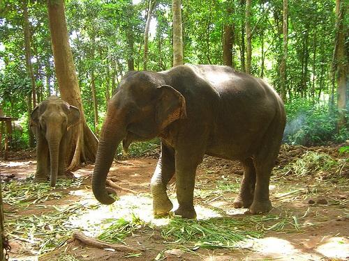 Elefanten, Koh Chang